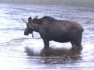 Don't drink the water by Pedaling Fool in Moose