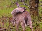 5-16-08 by Pedaling Fool in Deer