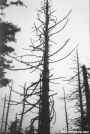 dead tree near Mt. Buckley by ghoul00 in Views in North Carolina & Tennessee