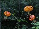 Flower In Snp by vanwag in Flowers