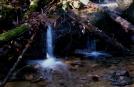 Stream in woods by vanwag in Views in Virginia & West Virginia