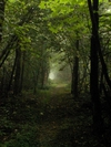 Light At The End Of A Tunnel by vanwag in Trail & Blazes in Virginia & West Virginia