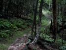 Trail In Shenandoah North Section