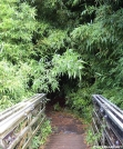 Entering Bamboo Forest