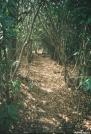 Enchanted Rhoddy tunnel