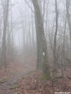 A foggy day near Unicoi Gap by Gman in Trail picture (contest)