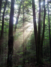 Lights In The Forest II by Belgarion in Views in New Hampshire