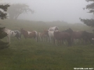 Ponies in the mist by Billygoatbritt in Other