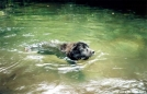 Slickrock Swimming Dog by Tipi Walter in Other