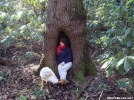Tree Spirits by Tipi Walter in Other People