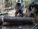 Ed Bell Moves The Mean Log