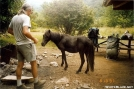 Wild Pony at Grayson Highlands by Tipi Walter in Trail & Blazes in Virginia & West Virginia