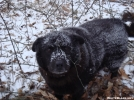 Dog In The Snow by Tipi Walter in Other