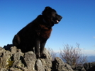 King Dog Surveys His Kingdom by Tipi Walter in Views in North Carolina & Tennessee