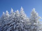 Ice Encrusted Fir Trees On The Bob by Tipi Walter in Views in North Carolina & Tennessee