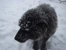 Shunka Likes The Snow