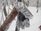 A Frozen Fleece Glove by Tipi Walter in Gear Gallery