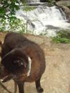 Shunka By Bald River Falls