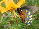 Butterfly With Flower On The Bob by Tipi Walter in Flowers