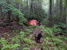 A Remote Campsite On Mcnabb Creek Trail by Tipi Walter in Tent camping