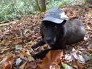Shunka Dog On Nichols Cove Creek by Tipi Walter in Trail Legends