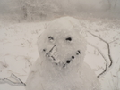 O Canada Hits But The Snowman Is Happy by Tipi Walter in Faces of WhiteBlaze members