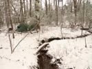 Long Branch Trail Campsite