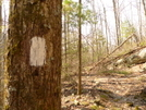 The White Blaze Of The Mcnabb Creek Trail by Tipi Walter in Trail & Blazes in North Carolina & Tennessee
