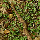 A Copperhead Walks Me Out by Tipi Walter in Snakes