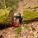 Little Santeetlah Creek Trail Has Some Massive Trees by Tipi Walter in Views in North Carolina & Tennessee