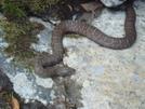 Water Snake At Wildcat Falls/slickrock