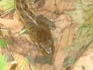 Friendly Trail Snake