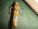 Interesting Moth by Tipi Walter in Other