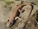 You've Got A Friend In A Lizard