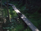 persistant pheasant on walkway, mile 1949 by EarlyBird2007 in Trail & Blazes in Maine