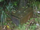 Stoat Trap Mt