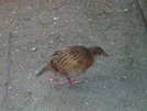 Weka Day 4 Mt #1