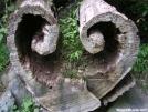 Tree heart by Rainbow in Wildlife (contest)