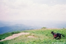 My dog, Coco on Hump Mtn. by Gaiter in Section Hikers