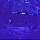 Boy Scout LT 1974