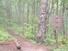 Plumorchard Gap by scope in Trail & Blazes in Georgia