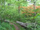 Neels-hogpen 5/21/11 by scope in Trail & Blazes in Georgia