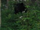 Big Bear by scope in Bears