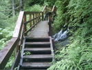 Ketchikan - Deer Mountain Trail 4 by camojack in Special Points of Interest