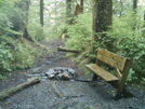 Ketchikan - Deer Mountain Trail 6 by camojack in Special Points of Interest