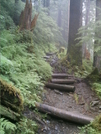 Ketchikan - Deer Mountain Trail 8 by camojack in Special Points of Interest