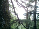 Ketchikan - Deer Mountain Trail 11 by camojack in Special Points of Interest