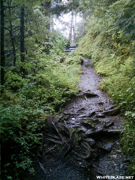 Ketchikan - Deer Mountain Trail 13