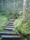 Ketchikan - Deer Mountain Trail 14 by camojack in Special Points of Interest