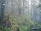 Ketchikan - Deer Mountain Trail 16 by camojack in Special Points of Interest